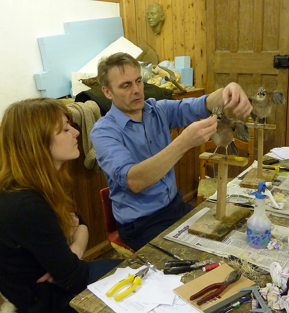 UK bird taxidermy training