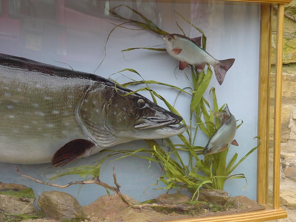 Taxidermy price list uk bird small mammal taxidermist for Fish taxidermy prices