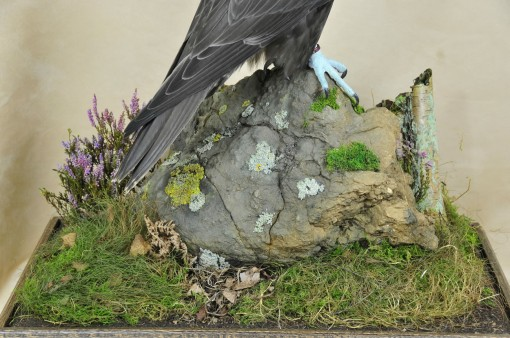 Gyrfalcons (Falco rusticolus)