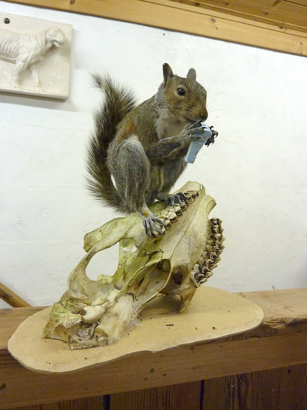 Small Mammal Taxidermy Training students work
