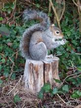 Grey Squirrel Taxidermy side view