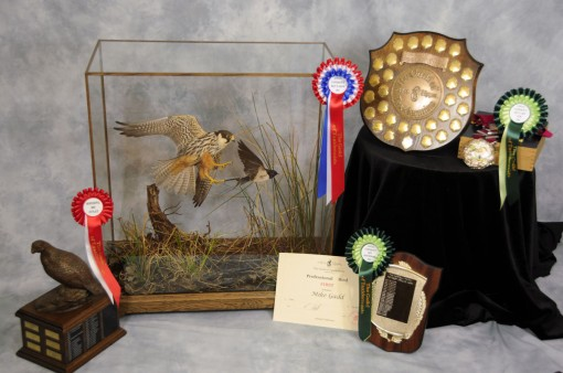 Bird Taxidermy Hobby Falcon winner 2013 all awards