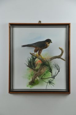 Taxidermy Hobby 3