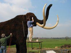 Mammoth Taxidermy