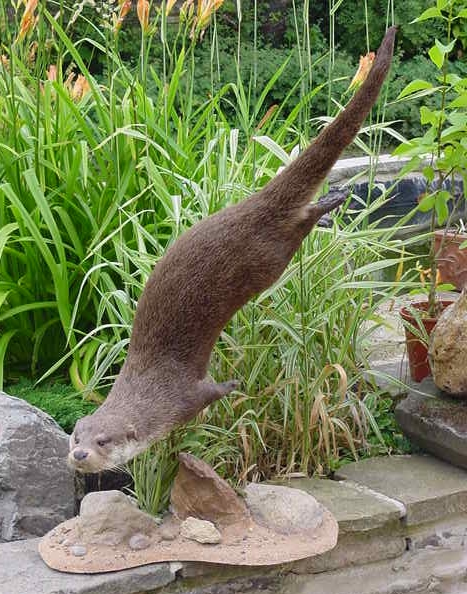 Taxidermy otter swimming