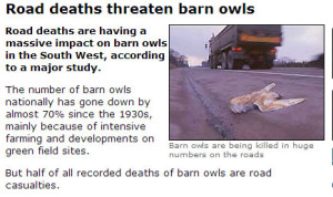 Owl's Killed on our Roads