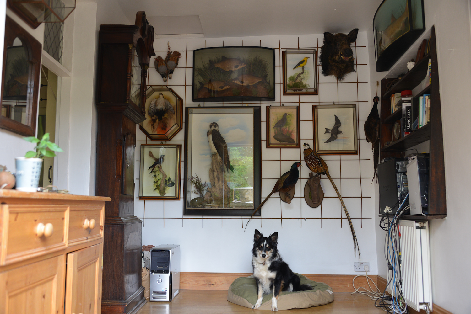 Taxidermy display finihsed with dog