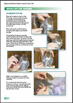 Squirrel Taxidermy Book p128