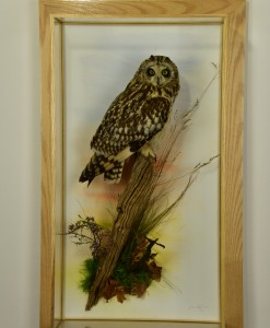 Bird Taxidermy Short Eared Owl (Asio flammeus) in Case 9047
