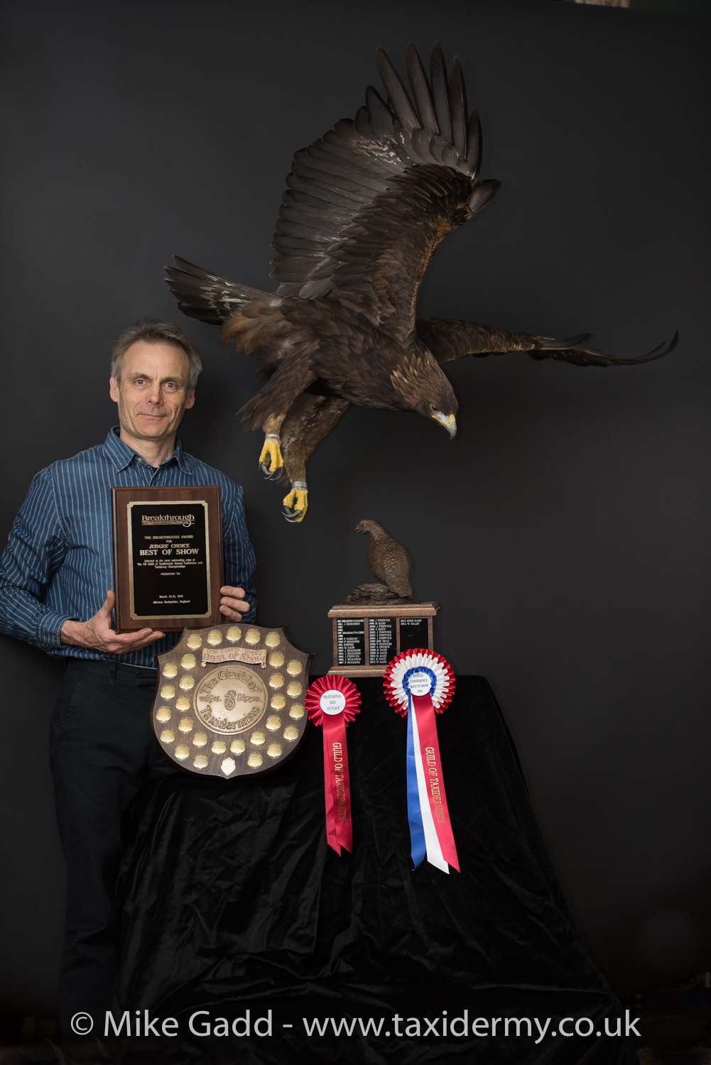 2015 UK Bird Taxidermy Winner Golden Eagle By Mike Gadd