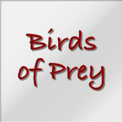 Birds of Prey For Sale