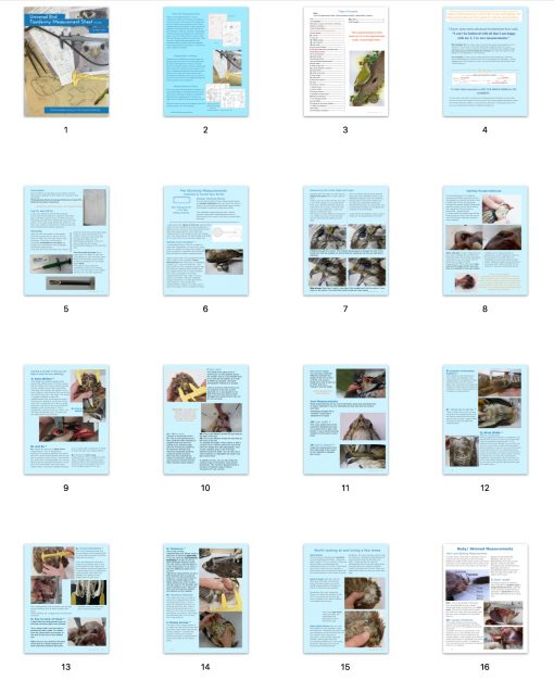 Bird Taxidermy Measurement Sheet Book