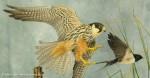 UK Bird Taxidermy Award Winner